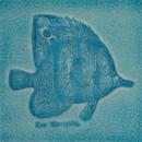 Spritzfisch türkis