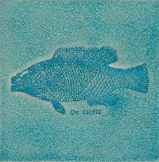 Lippfisch türkis