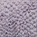 Ice blueberry craque