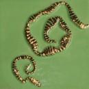 Schnecken Pistachio Gold